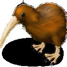 dashkard Kiwi